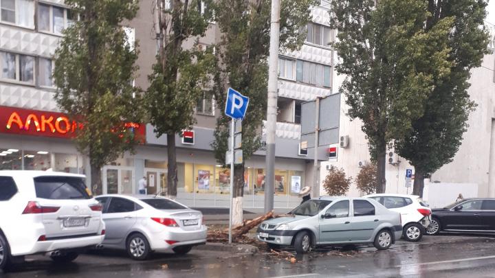 Древопад: 161.RU показывает последствия бури в Ростовской области