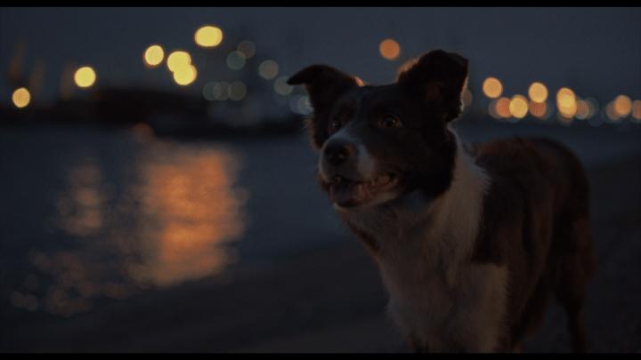 Уральцы сняли трогательную короткометражку о бездомных собаках, которым грозит отстрел