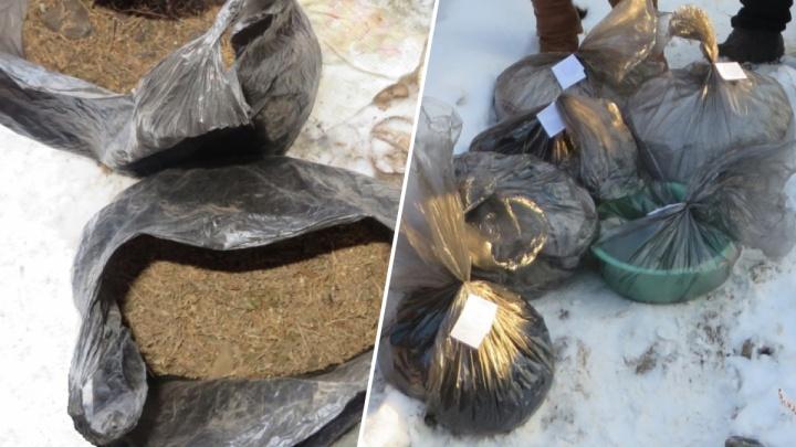 «Хранила для себя»: у молодой селянки нашли пакеты с 6,8 кило марихуаны