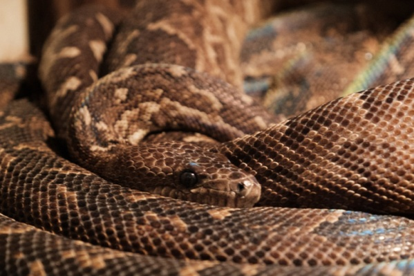 Боязнь змей встречается очень часто.
