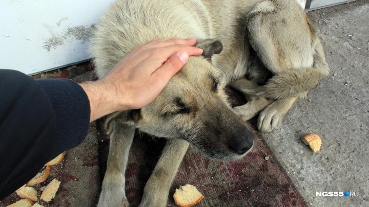 «У Халявы появилась опухоль»: умерла одна из самых знаменитых собак с Демьяна Бедного