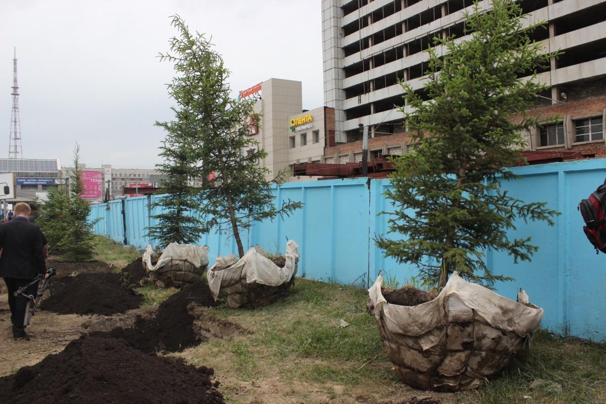 Для посадок привезли уже взрослые деревья. Фото Стаса Соколова