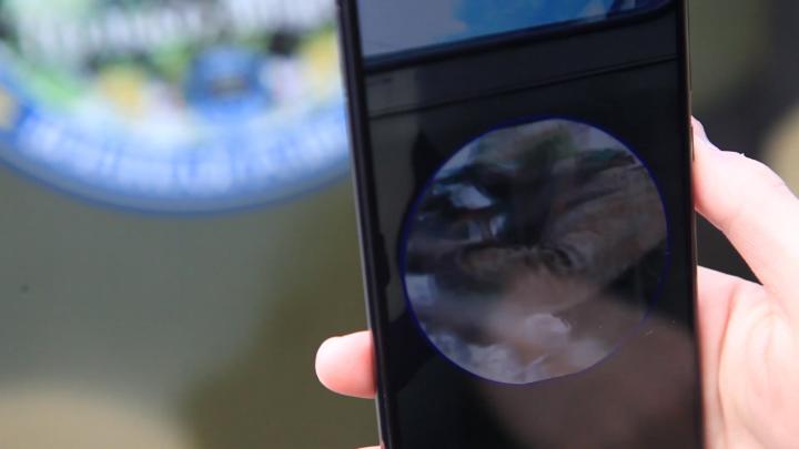 Новосибирец научил газету Минобороны РФ показывать видеоролики на смартфоне