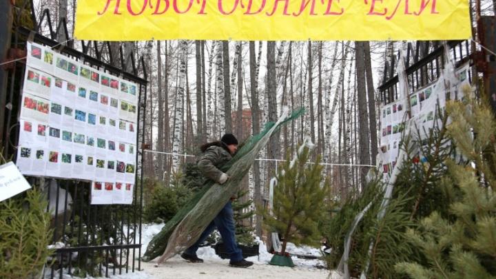 В Башкирии задержали виновных в незаконной вырубке елок