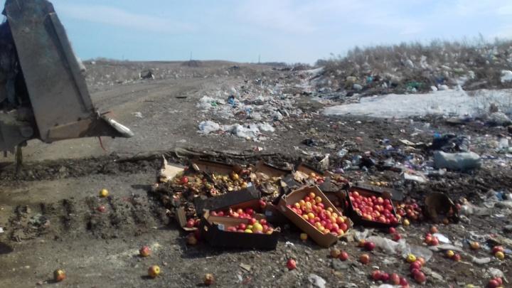 В Красноярске бульдозерами раздавили 369 кг польских яблок
