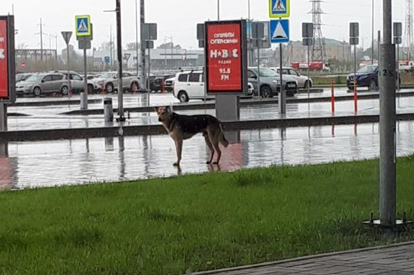 Пес не уходит далеко от здания
