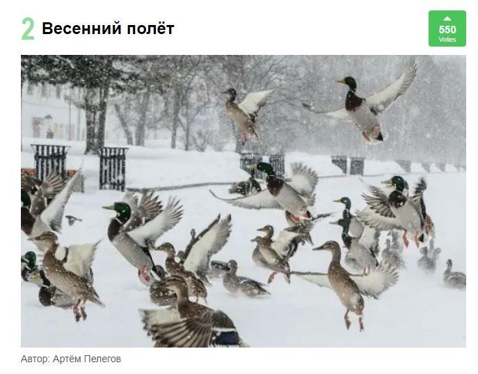 Весенний полёт от Артёма Пелегова