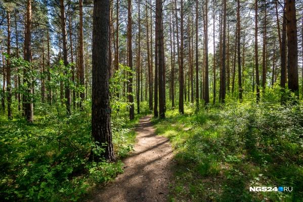 Согласно Лесному кодексу, устанавливать заборы в лесу запрещено