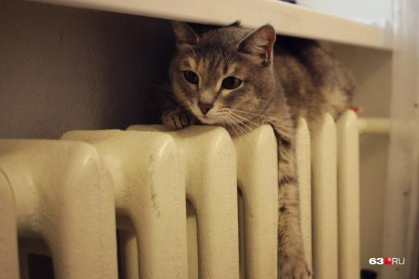 «Технические условия не позволяют одновременно дать отопление во все квартиры», — объясняют в мэрии