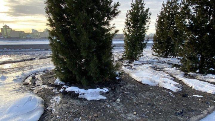 «Повредили водовод»: возле органного зала «Родина» затопило сквер с недавно высаженными деревьями