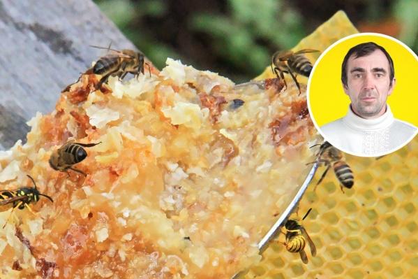 Мужчина занимается пчеловодством