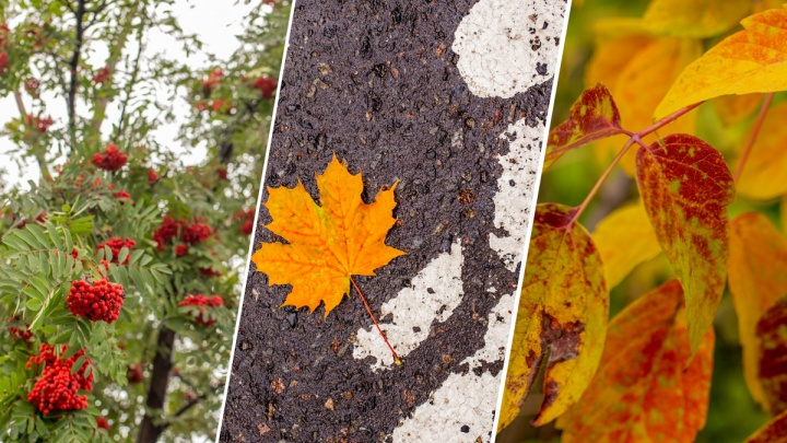 Началось: 10 фото, доказывающих, что уже подкрадывается осень