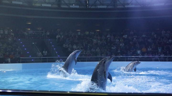 Океанариум продает детские билеты за 300 рублей: посмотреть на дельфинов стоит в два раза дороже