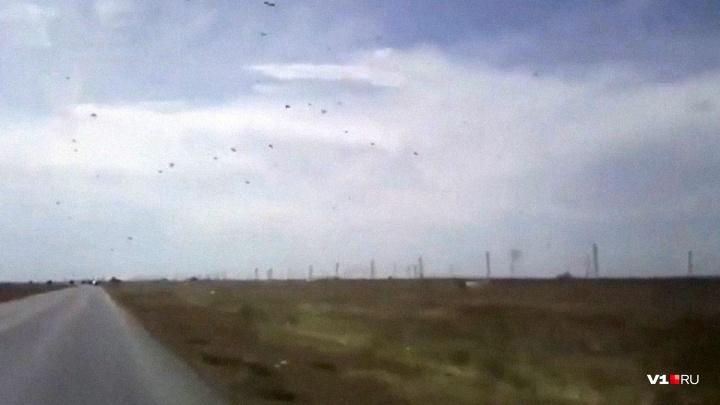 «Вредители выходят из депрессии»: три района Волгоградской области поражены саранчой