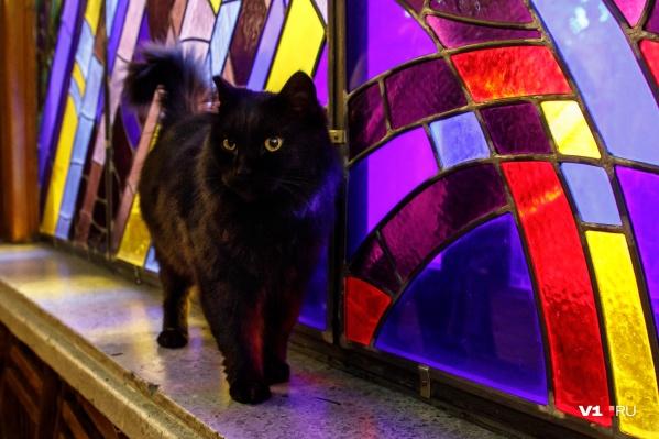 За четыре года кот завоевал любовь всех сотрудников и гостей планетария