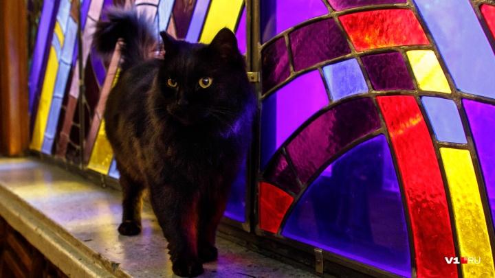 «Ты просто космос»: в волгоградском планетарии поселился звездный кот-танцор