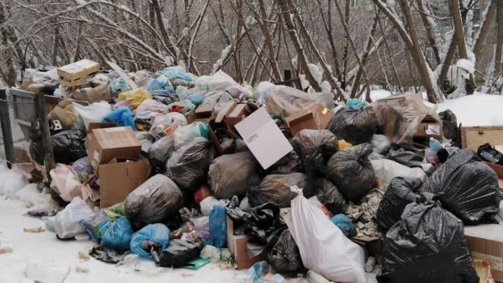 «Вот так и живём»: новосибирцы продолжают жаловаться на плохую уборку мусора