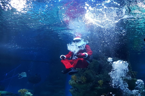 Смелый Санта в аквариуме с опасными рыбами