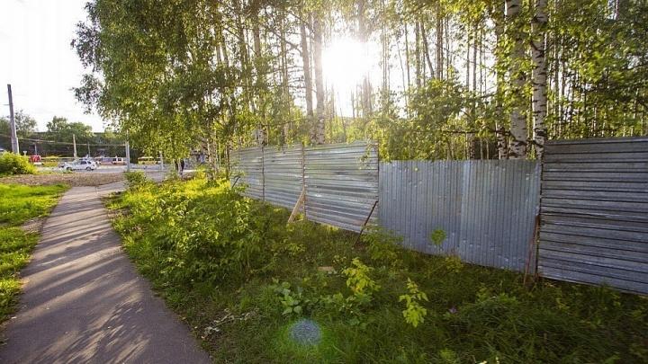 «Виновные будут наказаны»: мэр Рыбинска проведёт расследование по берёзовой роще
