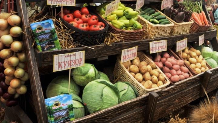 Мясо, овощи и арбузы по оптовым ценам: в Ярославле на два дня развернут большую торговую ярмарку