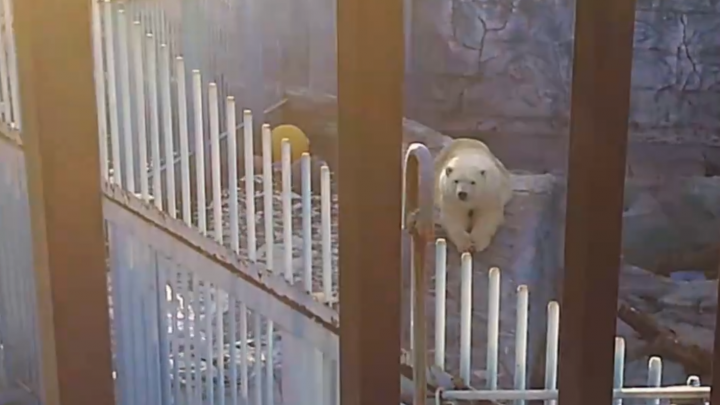 Зоопарк, ломбард и магазин изнутри: телеканал «Пятница!» показал, как обманывают екатеринбуржцев
