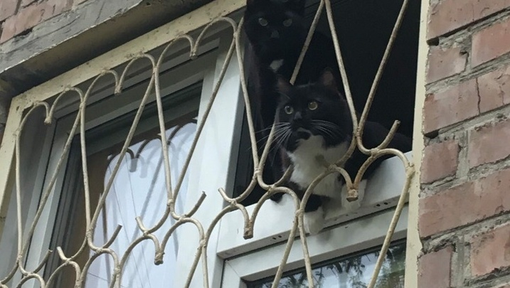 Кот застрял в приоткрытом окне и больше суток ждал помощи