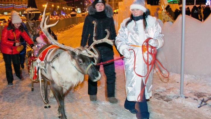 Челябинцев поставили перед выбором — нужныли катания на лошадях возле ледового городка