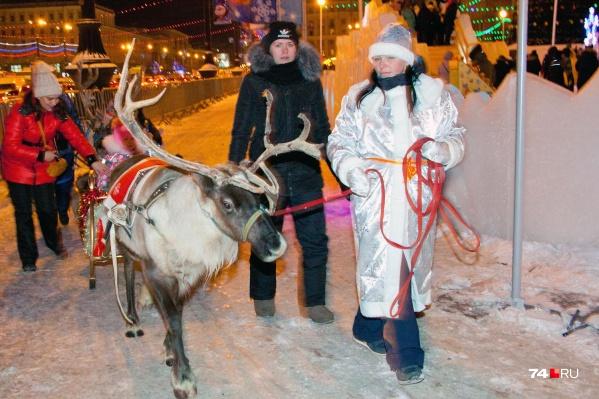 Вдоль ледового городка каждый год катают на оленях, лошадях и верблюдах