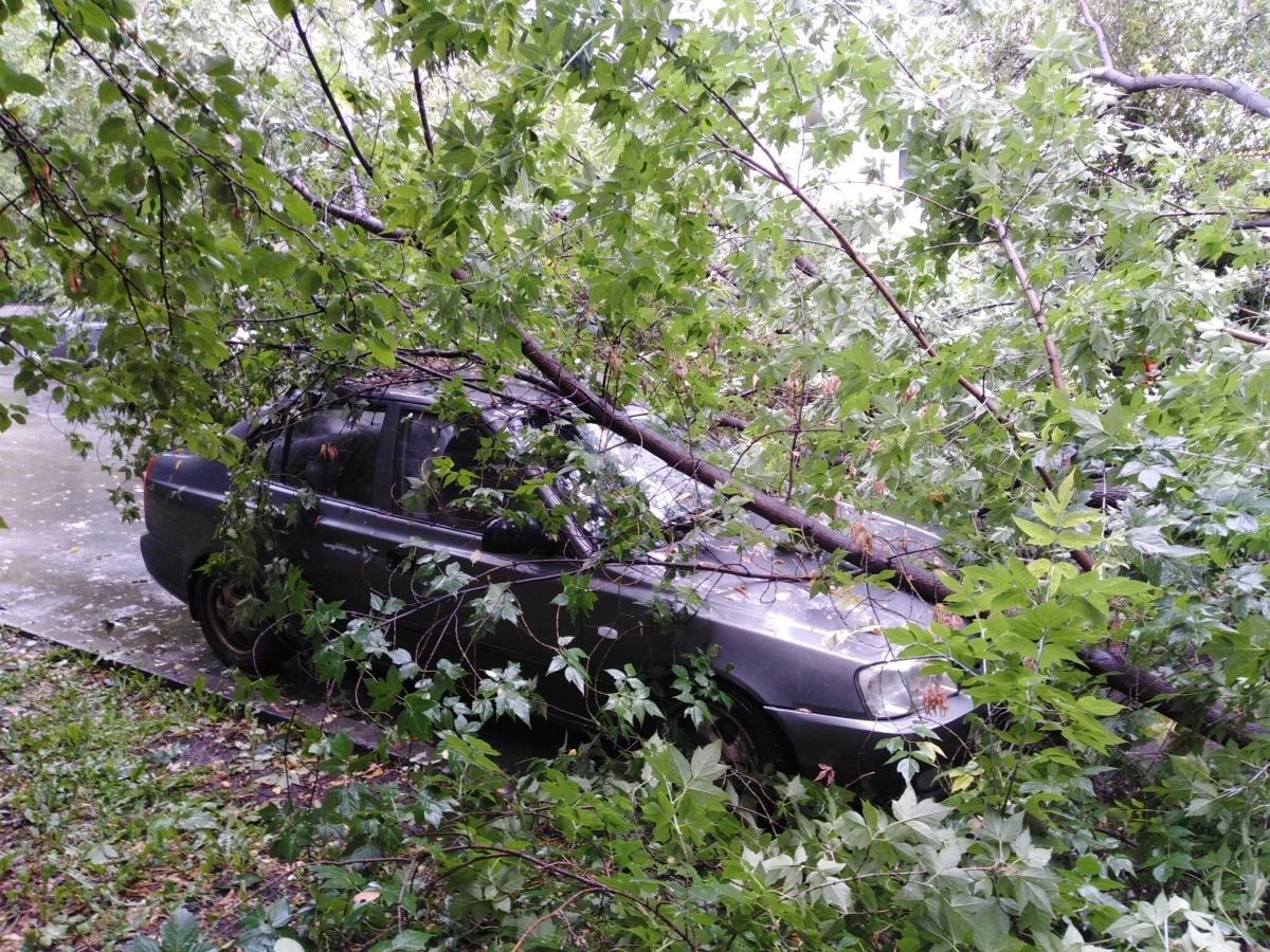 Два авто от падения дерева пострадали