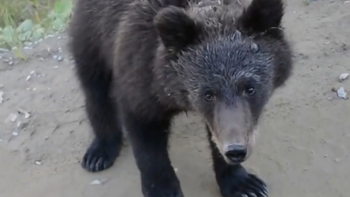 «Да ты его с руки покорми»: смиренному медведю дали хлеба и сняли на видео