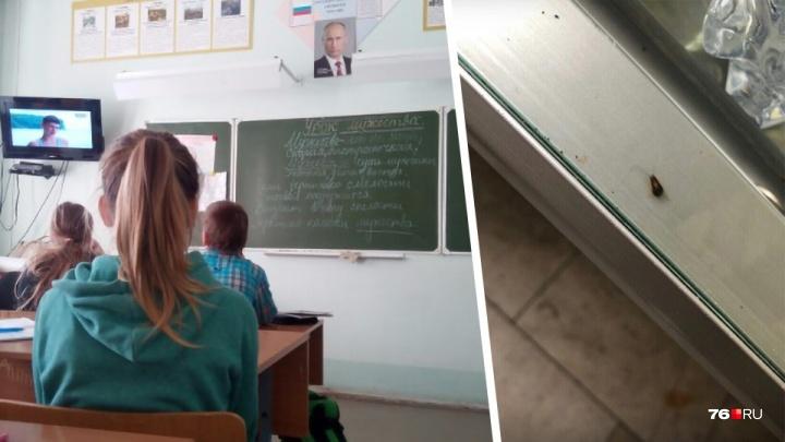«Вся столовая кишит тараканами»: в Ярославле школьники отказываются есть из-за противных насекомых