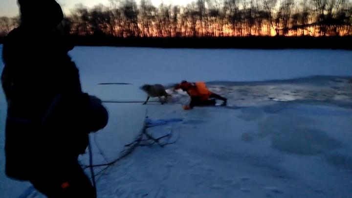 В Кургане спасатели вытащили из полыньи тонущую собаку