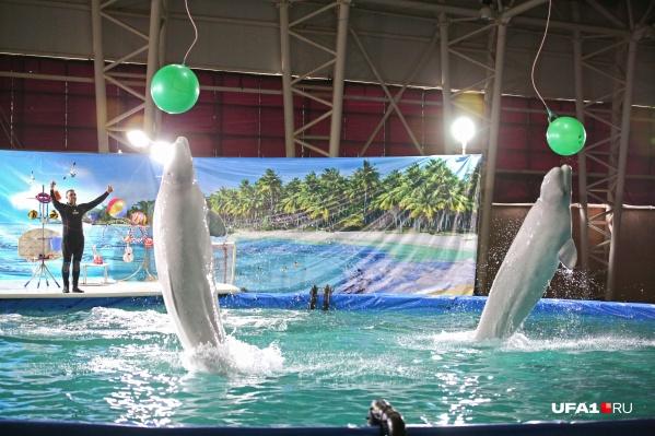 В Уфе и сейчас есть возможность увидеть шоу дрессированных морских животных. Правда, не в любой день, а лишь в то время, когда в столице Башкирии гостит заезжий дельфинарий