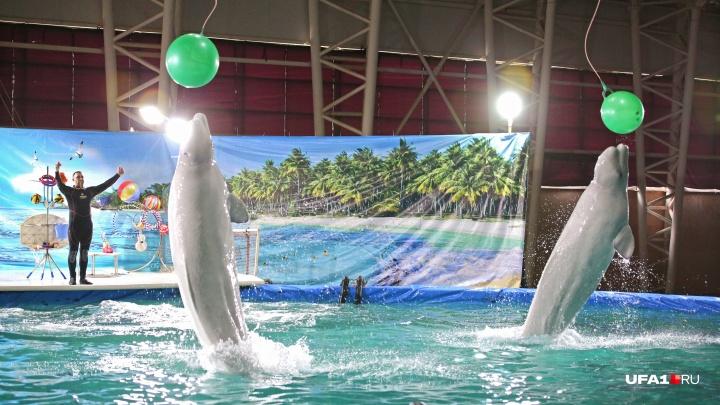Горожан встревожили сообщения о «тайных» общественных слушаниях по строительству дельфинария в Уфе