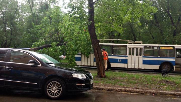 Движение замерло: на улице Вольской дерево упало на троллейбус