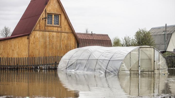 Дачу может подтопить: власти предупредили новосибирцев о повышении уровня воды в Оби