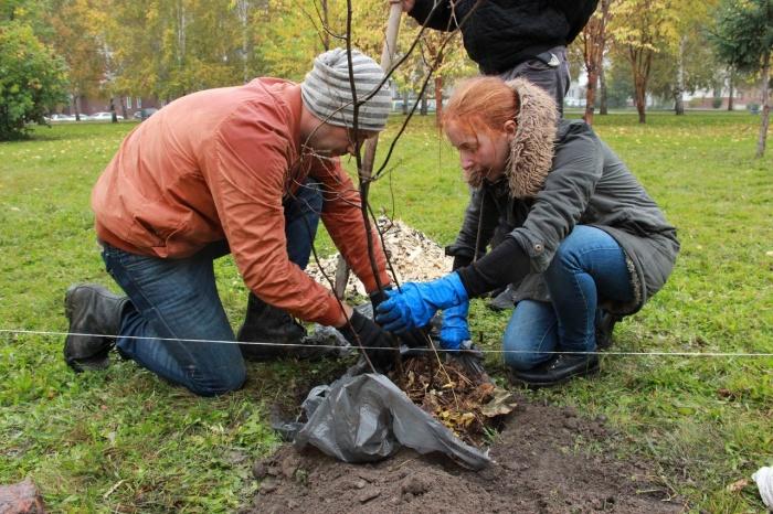 Поклонники успели посадить только шесть деревьев из запланированных 40