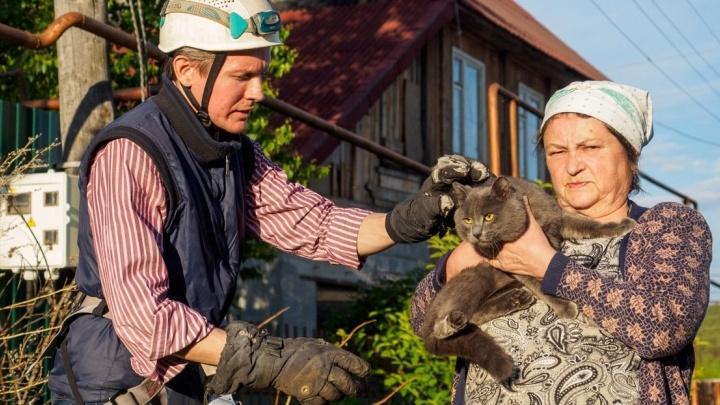 Васька под напряжением: екатеринбуржец снял со столба кота, который просидел там два дня