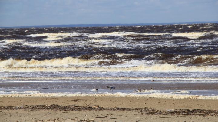 «Фон в пределах нормы»: в Северодвинске исследовали грунт, песок, речную и морскую воду