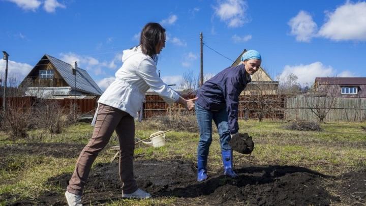 Садоводам на заметку: учёные аграрного университета рассказали, что пора высаживать в огороде