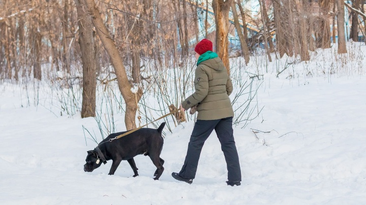 С пакетом и в наморднике: как владельцы собак обязаны выгуливать своих питомцев