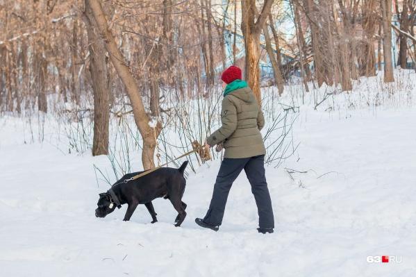 Некоторые владельцы собак игнорируют требования закона
