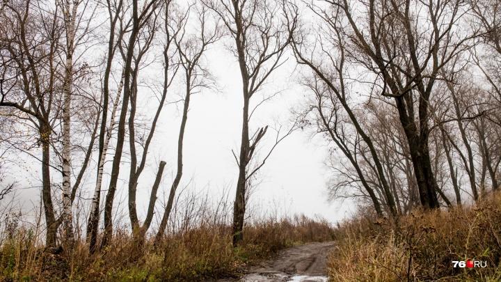 В Ярославской области второклассник, чтобы попасть в школу, ходил пешком через лес