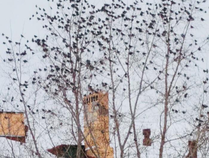 Сотни птиц сегодня можно заметить в самом центре города