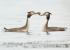Смотрите, как романтично: лучшим фото мая читатели выбрали пару водных птиц
