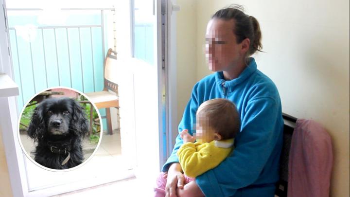 «На детей он никогда не бросался! На взрослых — да»: в двухлетнюю девочку вцепился пёс. Подробности