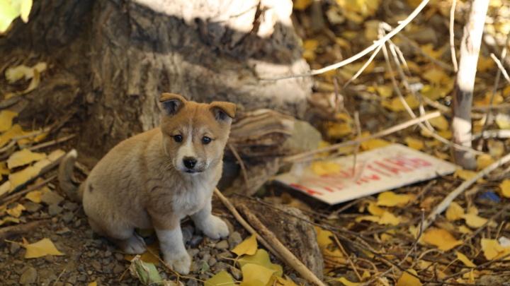 Кусают, пугают и портят автомобили: бродячие псы установили «беспредельный» рекорд в сентябре