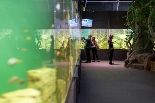 Посетителей смутила мутная вода и отсутствие зелени в аквариумах
