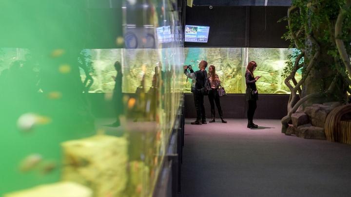 В самарском океанариуме ответили на претензии зоозащитников