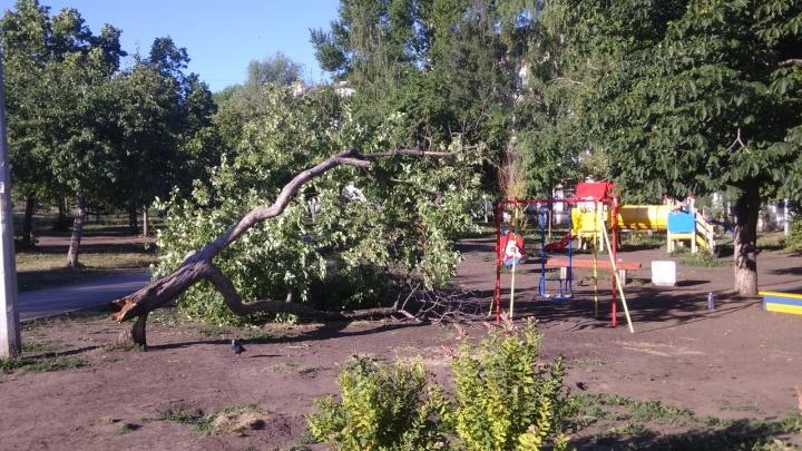 В Самаре дерево рухнуло на детскую площадку около Дома молодежи